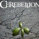 Cerebelion
